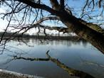 Mlýnský rybník (Česko)