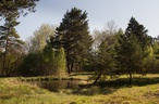 Přírodní rezervace V Bahnách (Rakovník-oblast, Česko)
