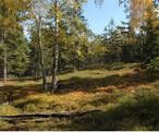 Přírodní rezervace Na Skalách (Příbram-oblast, Česko)