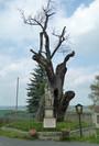 Svatováclavský dub (Stochov, Česko)
