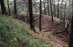 Hlavačov (hrad)
