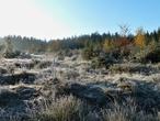 Přírodní rezervace Padrťské rybníky (Česko)